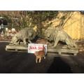 Impressive Lions